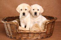 Legowisko z koszyka dla psa lub kota