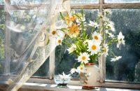 Ozdoba okna - firanki do kuchni i nie tylko