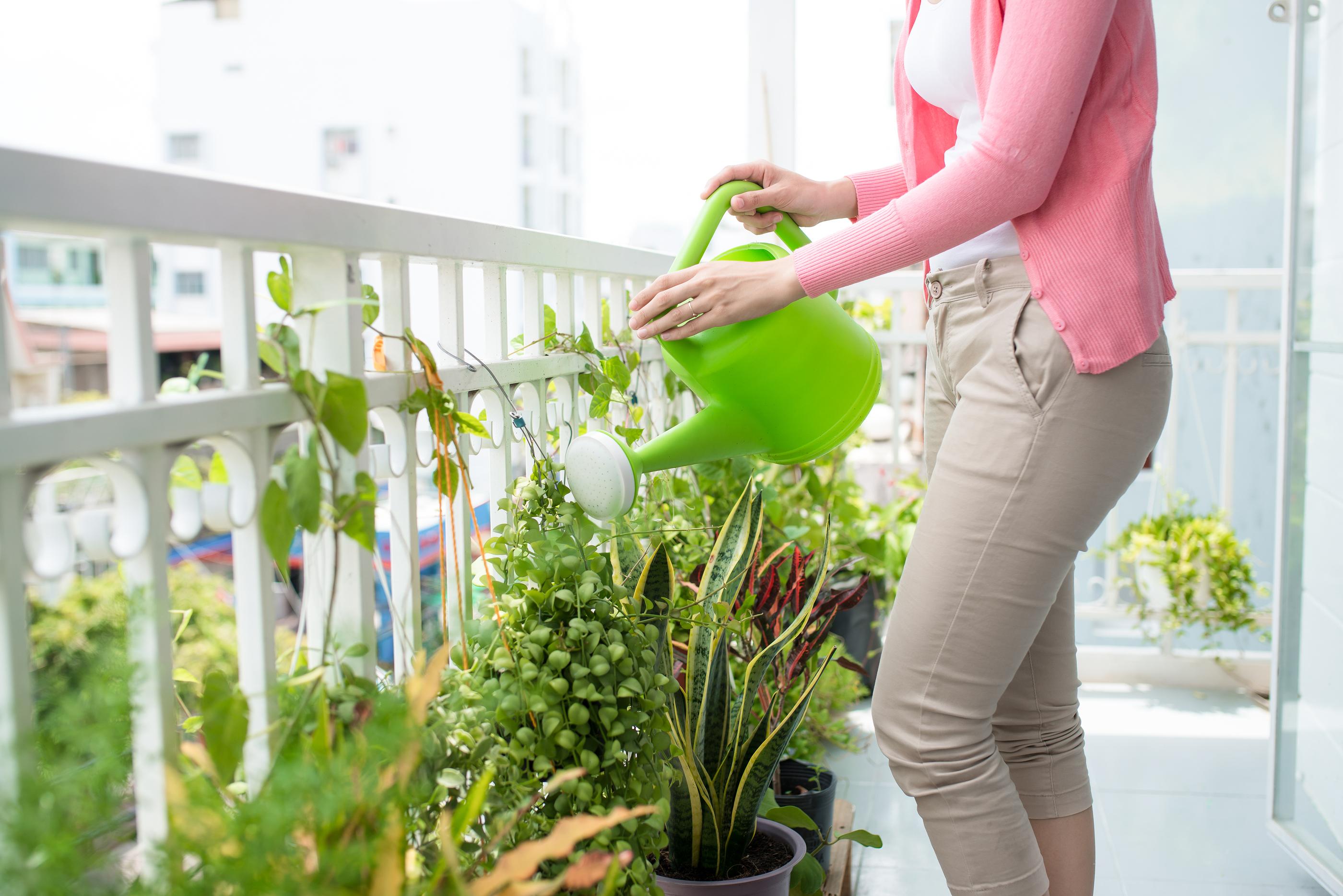 Kwiaty Na Każdy Balkon Zobacz Jakie Rośliny Pasują Na