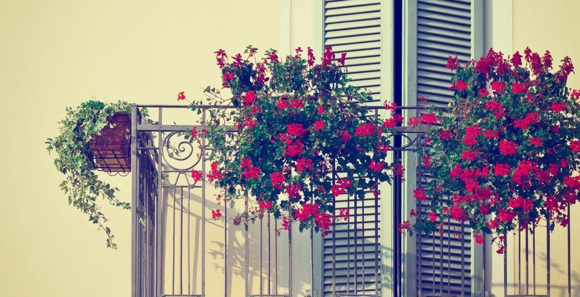 Kwiaty Doniczkowe Na Balkon I Do Domu 5 Najlepszych Kwiatów Na Wiosnę